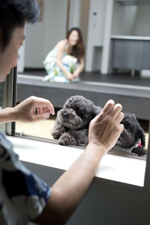 愛犬とアイコンタクト