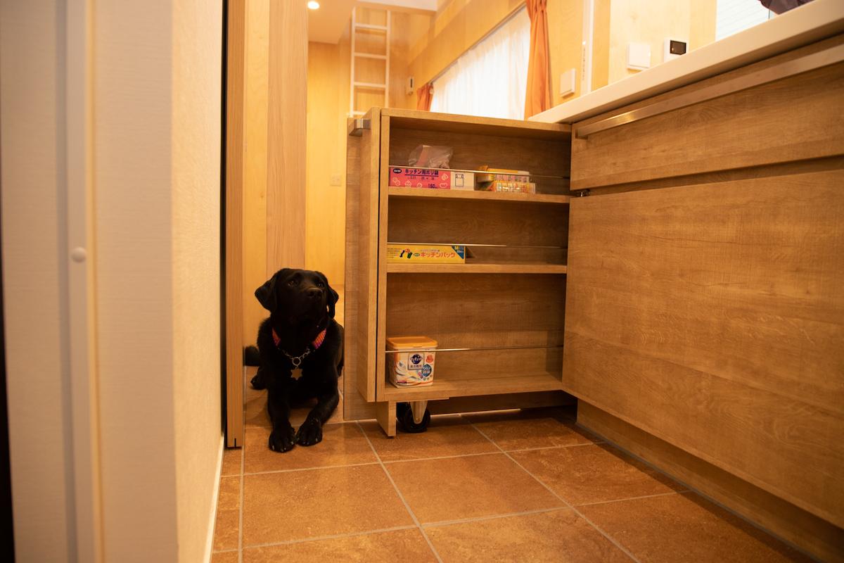 愛犬家住宅 オープンキッチンのキャビネットドア