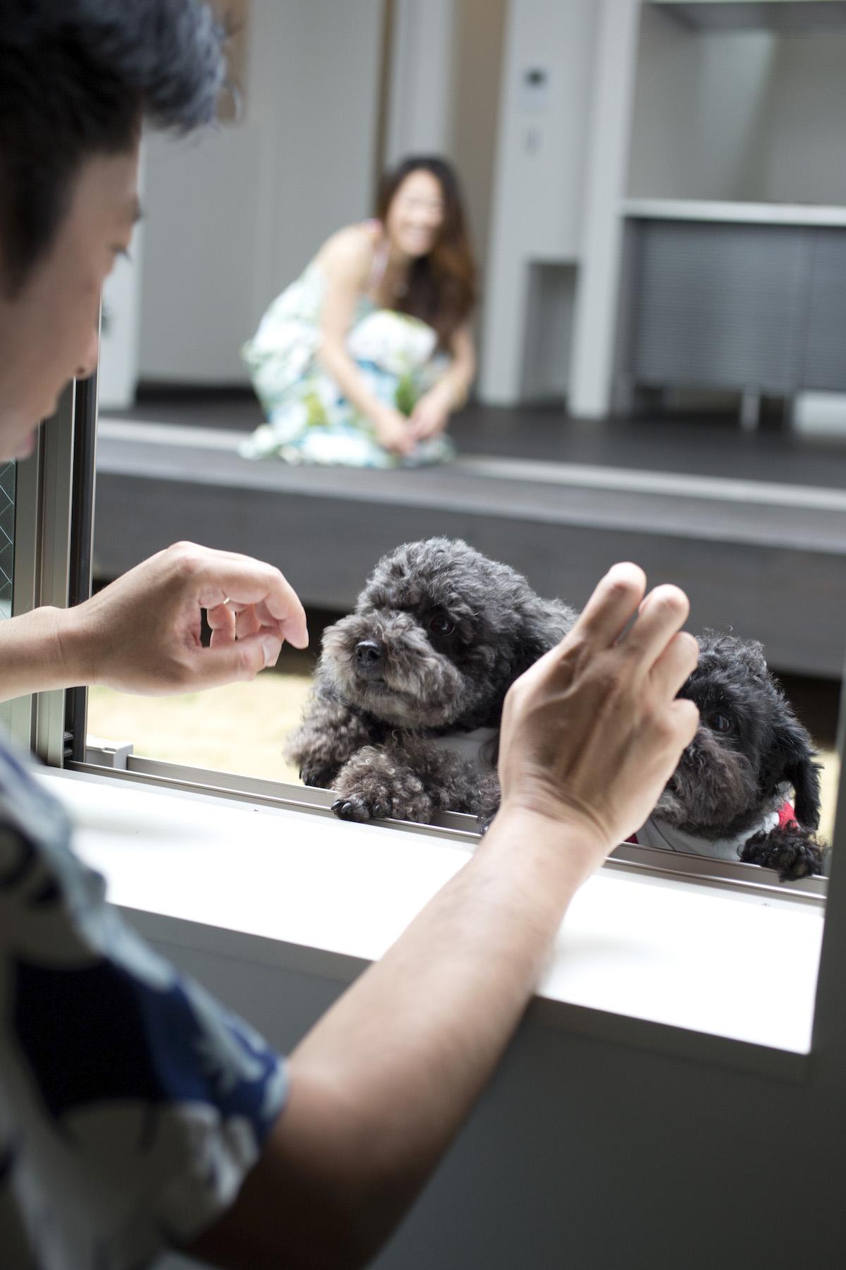 愛犬から目線を合わせることができるスキップフロア