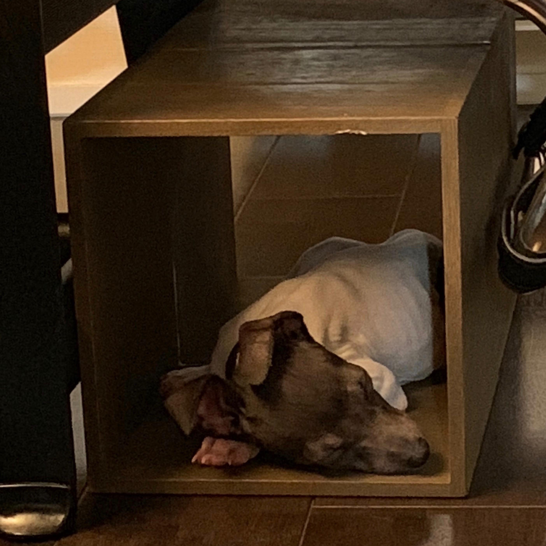 木箱を活用した愛犬用の寝床