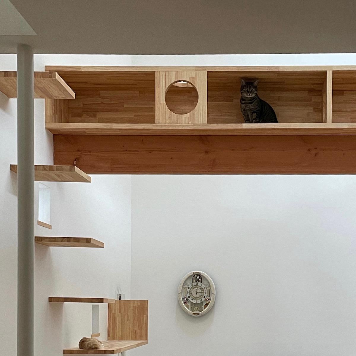 猫の居場所